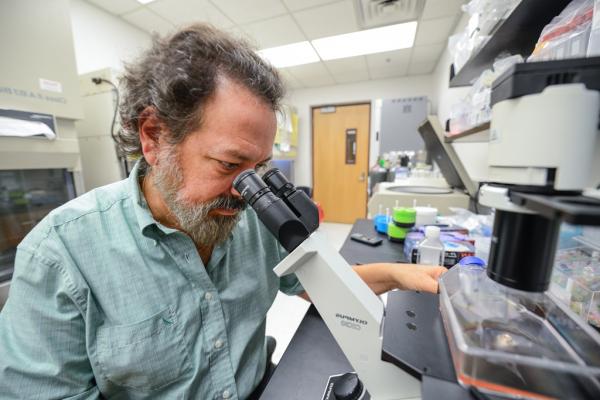 David Pascual PhD