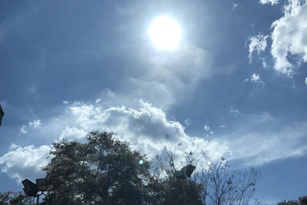 Sunshine over a tree