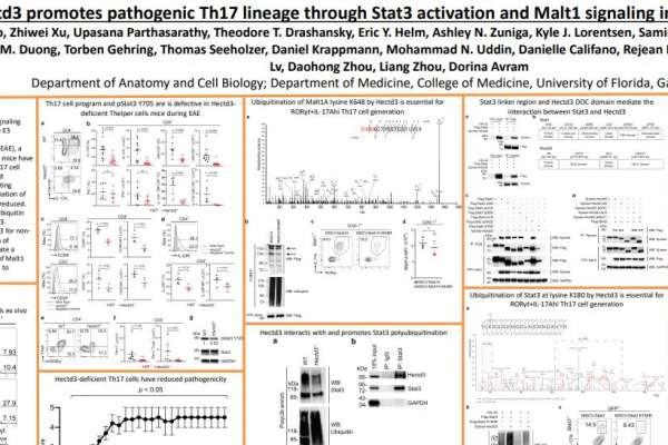 Hectd3 promotes pathogenic Th17 lineage through Stat3 activation and Malt1 signaling in neuroinflammation
