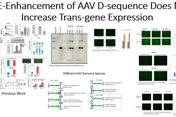 GRE Enhancement of AAV Does Not Improve Transduction Efficiency
