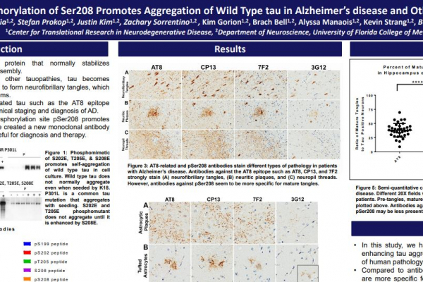 Tau Phosphorylation of Ser208 Promotes Aggregation of Wild Type tau in Alzheimer's disease and Other Tauopathies
